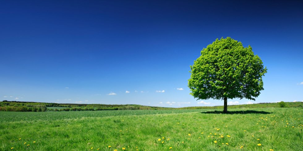 Wiese und Baum
